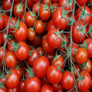 Chelly Tomato Red